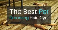 The Best Pet Grooming Hair Dryer for Dogs and Cats in 2018