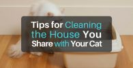 Tips for Cleaning the House You Share with Your Cat