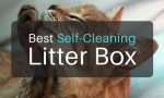 What is the Best Self Cleaning Litter Box in 2018