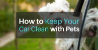 How To Keep Your Car Clean With Pets