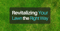 Revitalizing Your Lawn the Right Way